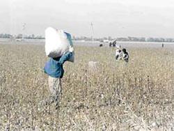 Узбекистанских детей принуждают к труду