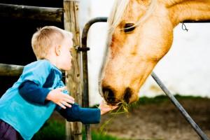 Лошади помогут детям Полтавщины выздороветь