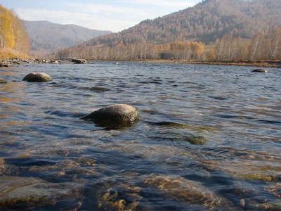 На осенних каникулах дети Алтайского края будут исследовать окружающую среду