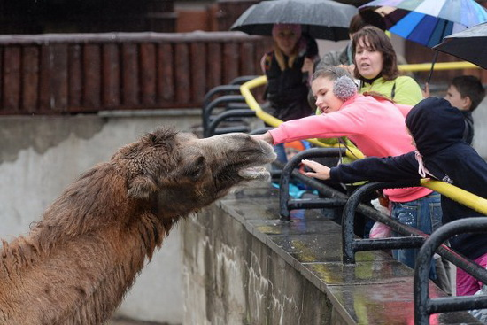 Лагерь для детей от 7 до 10 лет открывает Московский зоопарк