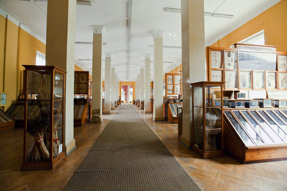 Приёмные семьи Москвы посетят музеи при МСХА им. Тимирязева