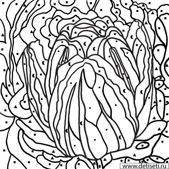 Раскраски по цифрам: Тюльпан