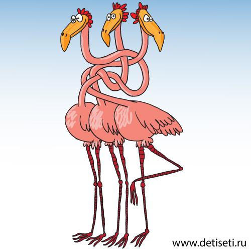 Розовые фламинго запутались