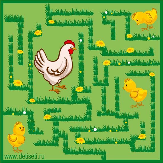 Цыплята ищут маму-курочку